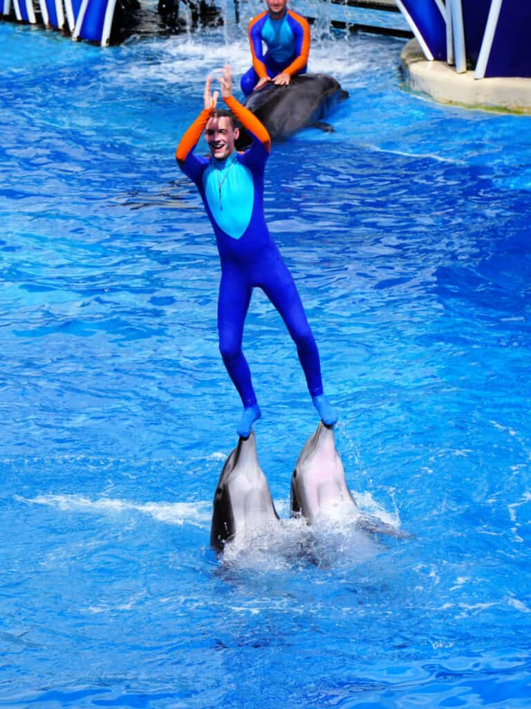 man on top of dolphins