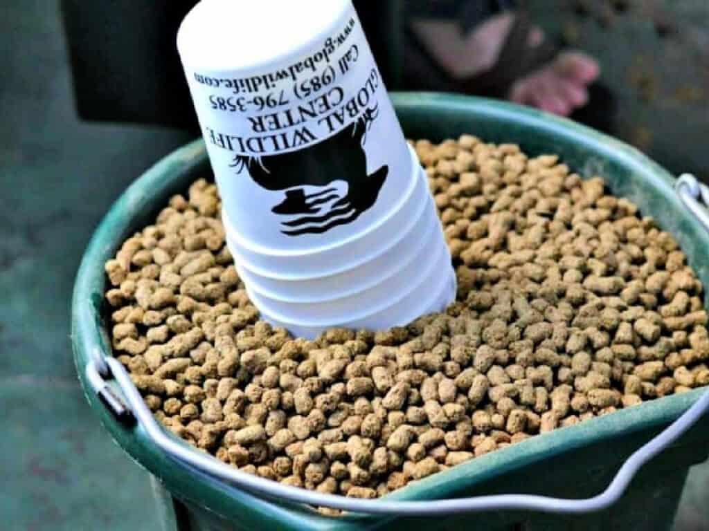 Bucket of animal feed