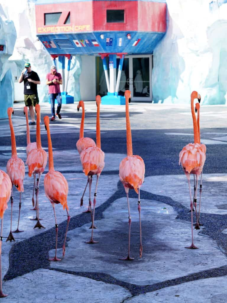 flamingos walking down a road