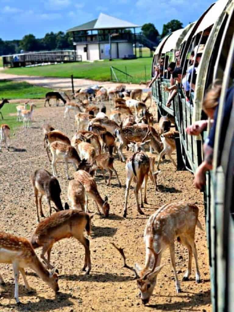Feeding animals from a caravan
