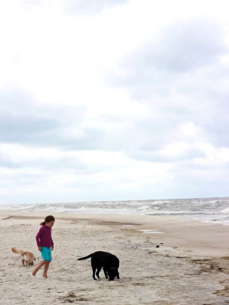 child and dogs on the beach