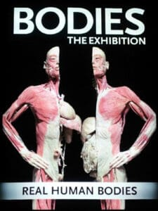 Bodies The Exhibition poster