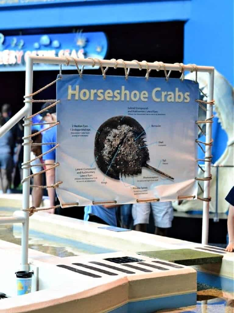 horseshoe crab exhibit
