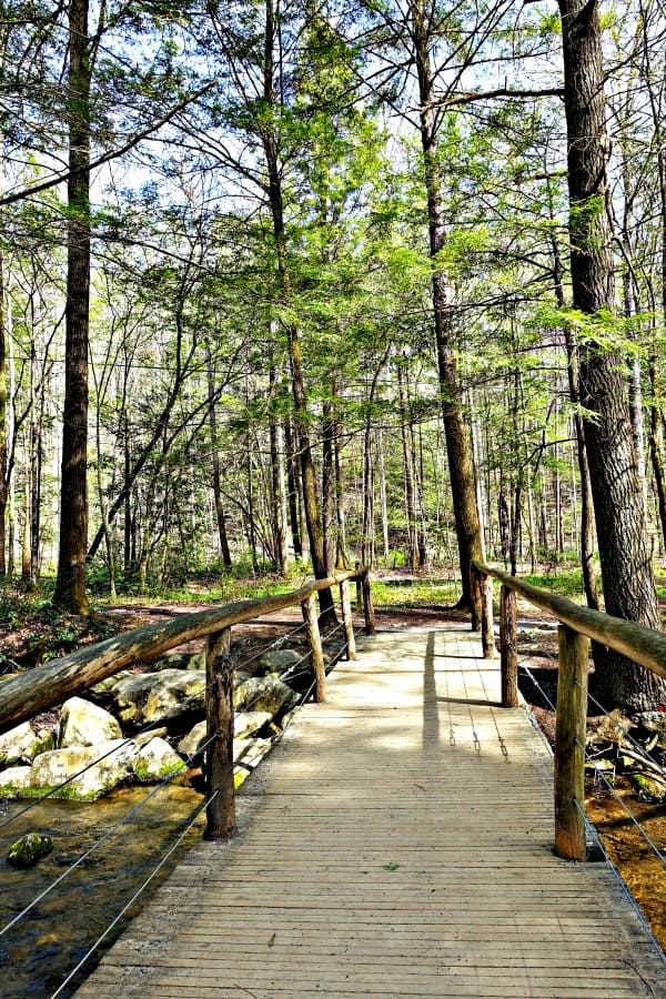 path in the Smoky mountains