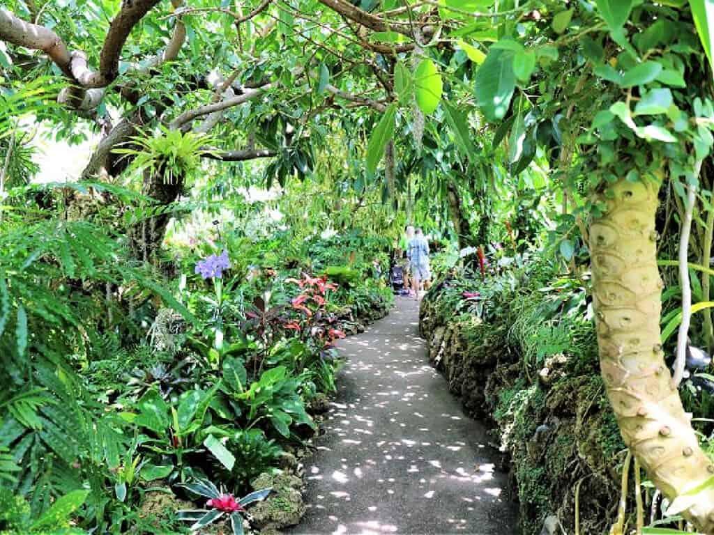 plants inside a conservatory