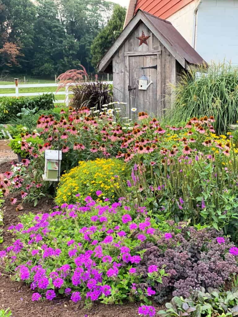 Colorful Amish garden on a farm.