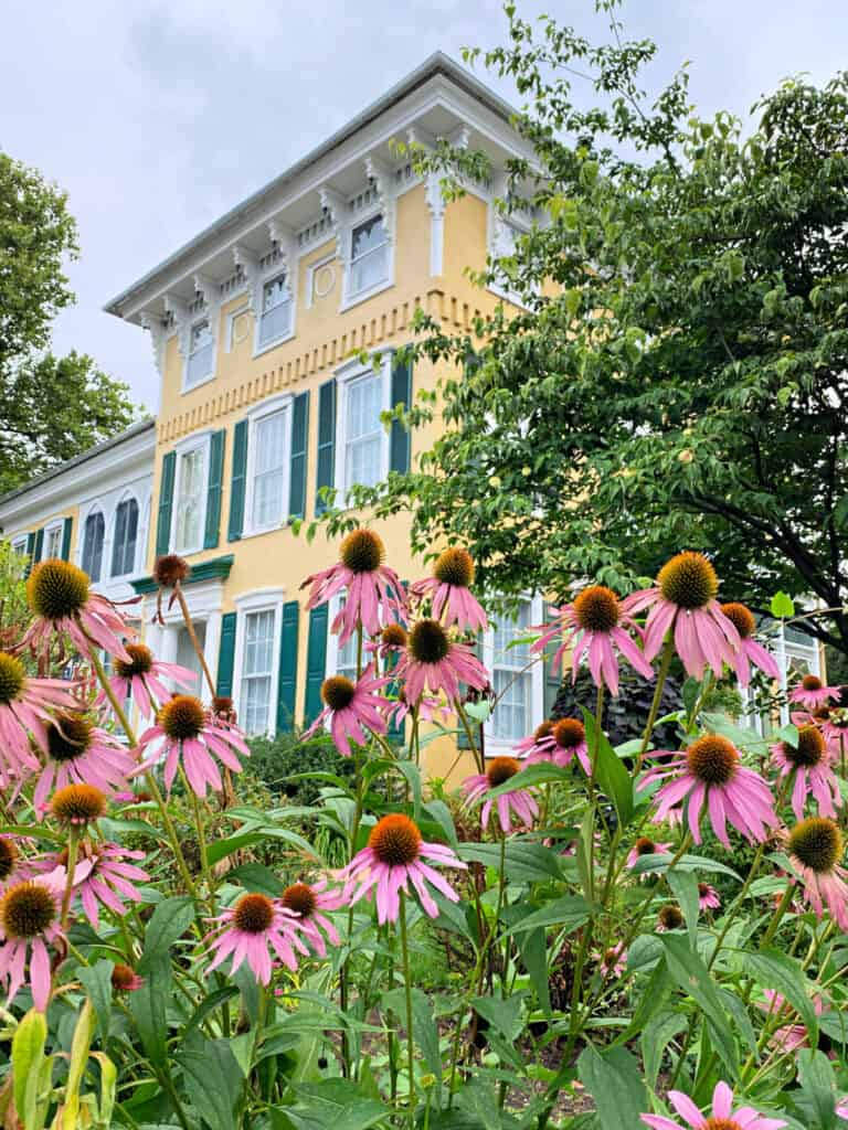 Cone flowers in front of a yellow historic bed and breakfast.