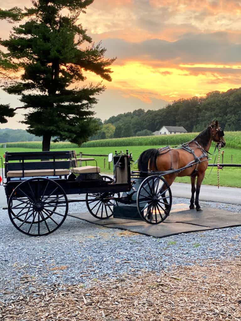 Amish horse and buggy on a farm.